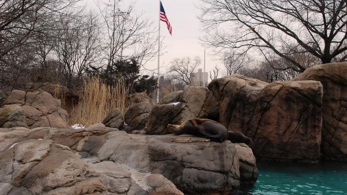 Seehund im Bronx Zoo