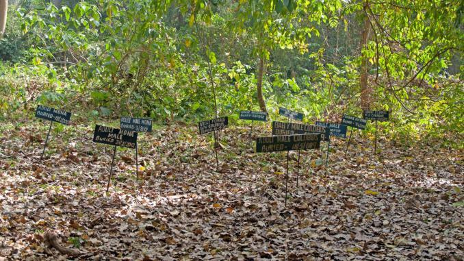 Affenschutzreservat Boabeng-Fiema Ghana