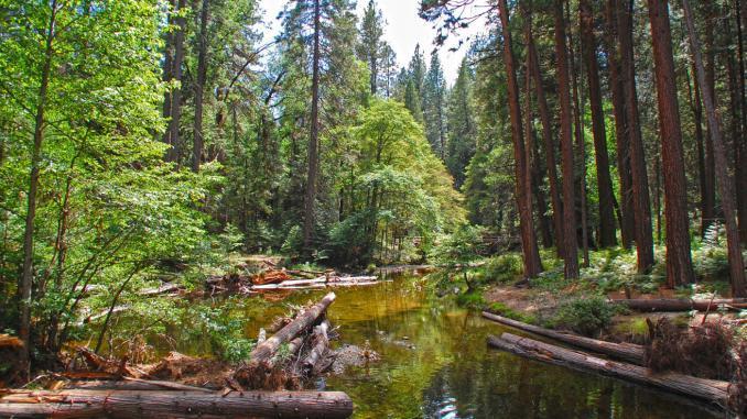 Es lohnt sich auf Wanderung im Yosemite NP zu gehen. Abseits der Hauptstraßen findet man noch viel Ruhe und einsame Natur vor.