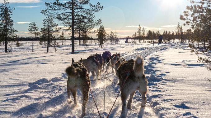 Hundeschlitten Lappland