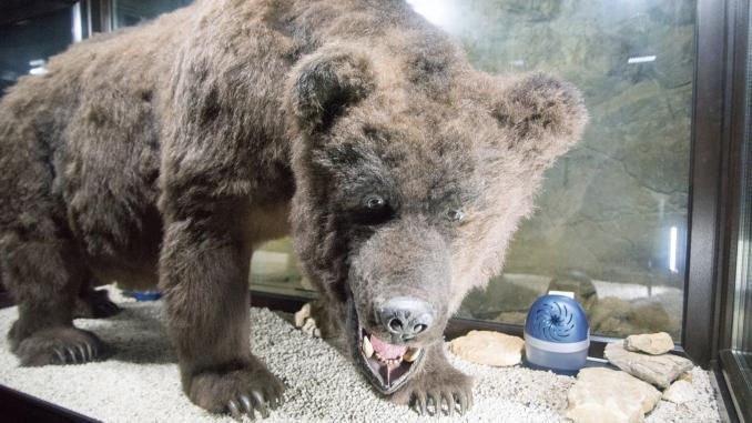 Heinrichshöhle Bär