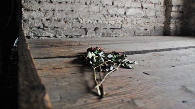Rose in Birkenau-Baracken